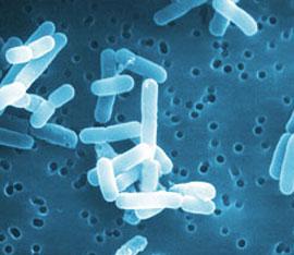 azione-antimicrobica-del-lactobacillus-reuteri